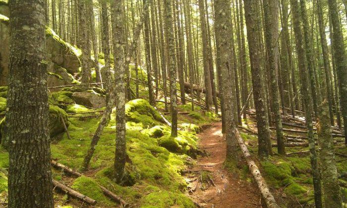 full-1023-24010-enchantedforest